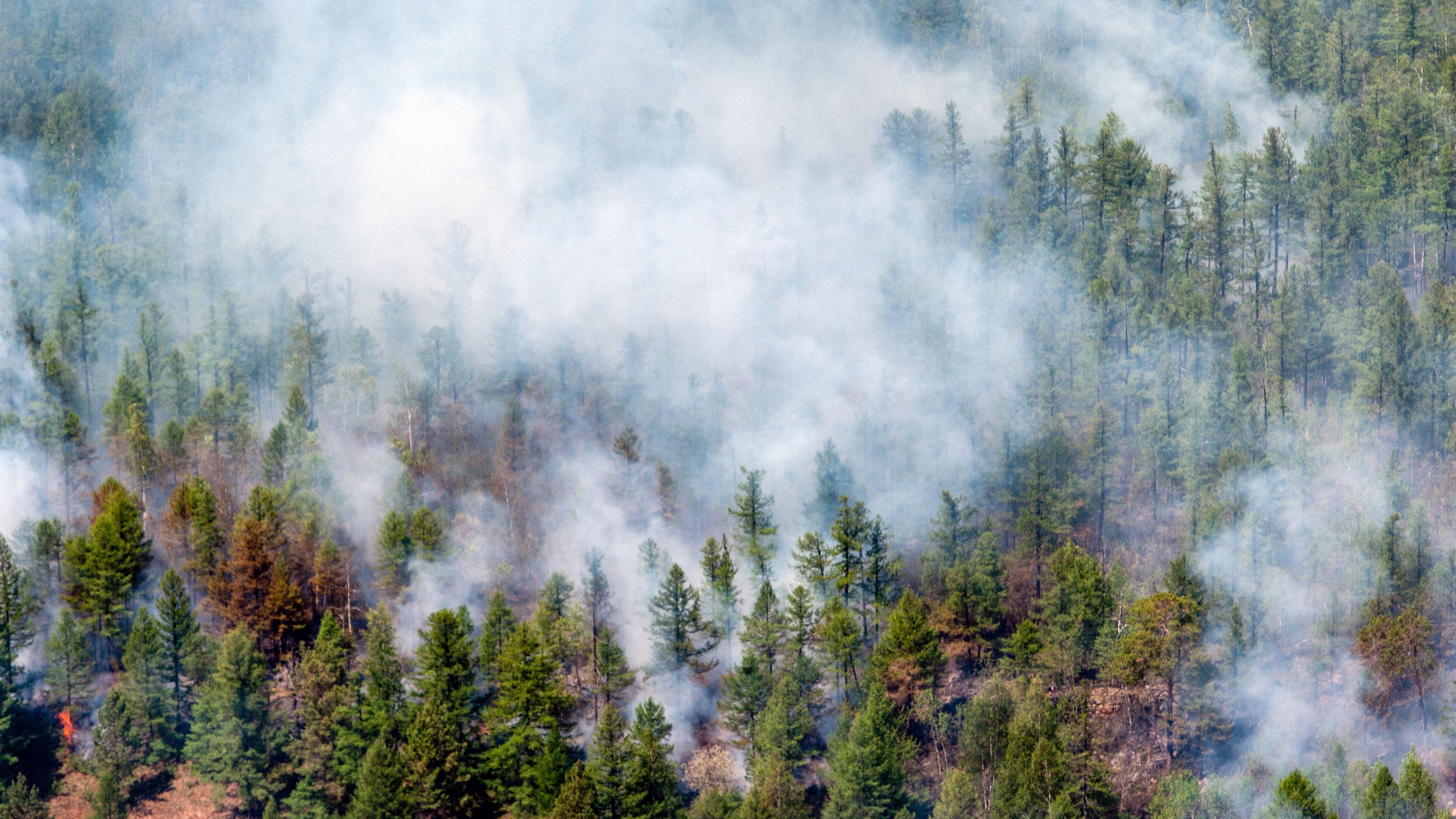 Пожары в Чернобыльской зоне уничтожили более 11 тысяч гектаров леса