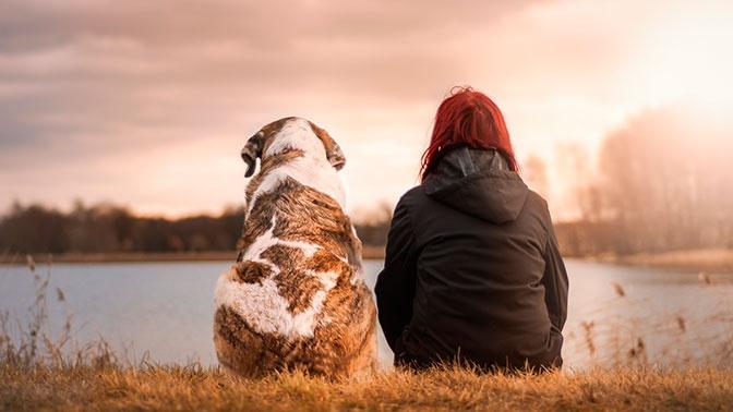 Главный кинолог России прокомментировал предложение о наказании за собачий лай