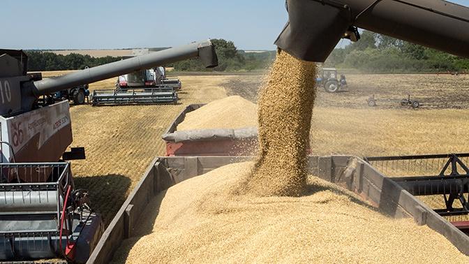 Bloomberg предупредило о нехватке российской пшеницы в мире