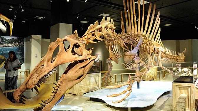Существование  хищных плавающих  динозавров подтвердила неожиданная находка