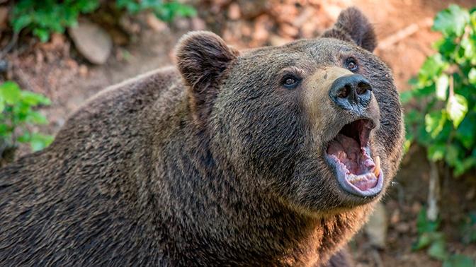 Самоизоляция не для всех: к жилым домам в Подмосковье вышел медведь