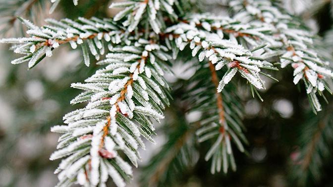 Заморозки в Подмосковье: объявлен оранжевый уровень погодной опасности