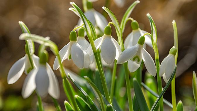 Робкая весна: в Гидрометцентре пообещали тепло в Москве к 25 мая