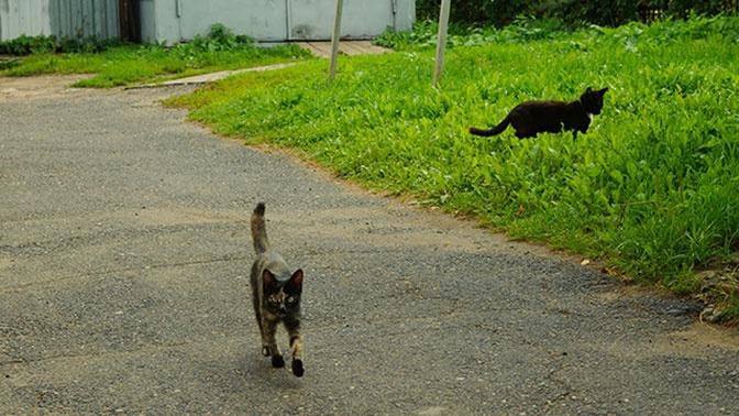 Кошку с коронавирусом поместили на карантин в России