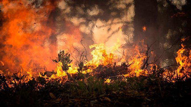 Сибирь в этом году могут накрыть «зомби-пожары»