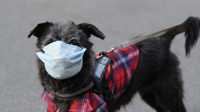 Доктор Мясников опроверг способ передачи COVID-19 человеку от животных