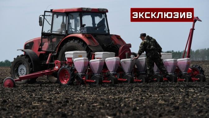 Бизнес, который кормит: как правительство может помочь справиться с кризисом фермерам
