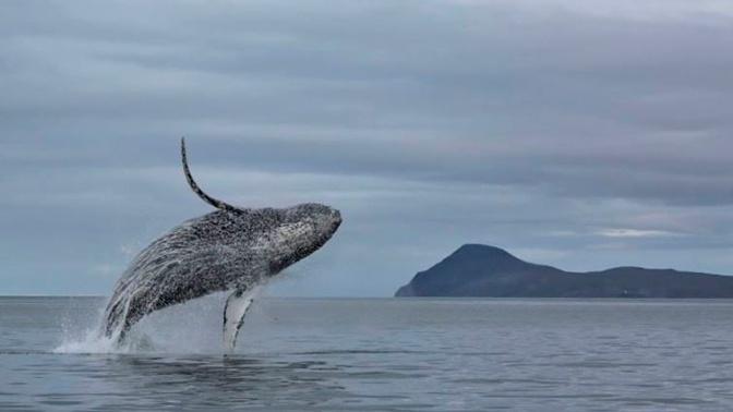 На Чукотке появится новый морской заповедник