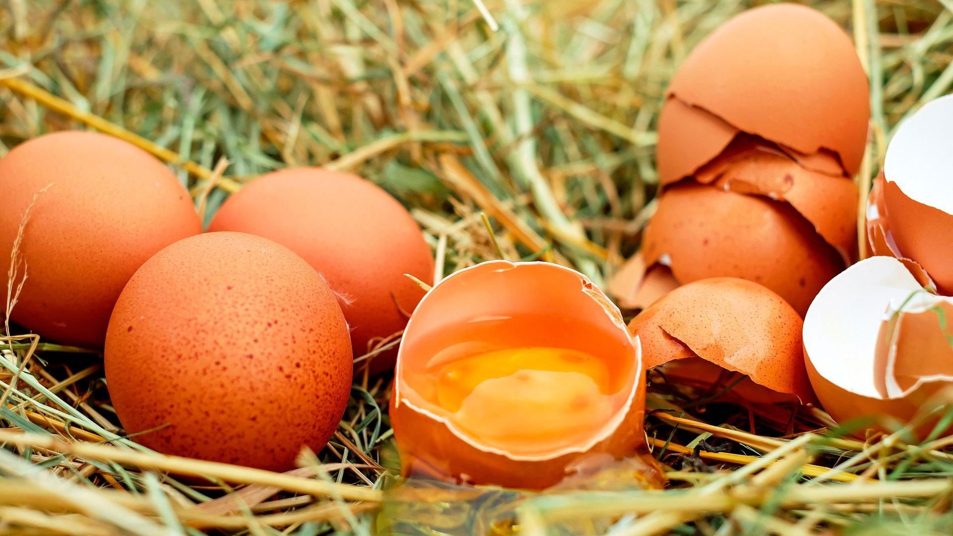 Испанские диетологи назвали продукты, защищающие легкие при коронавирусе
