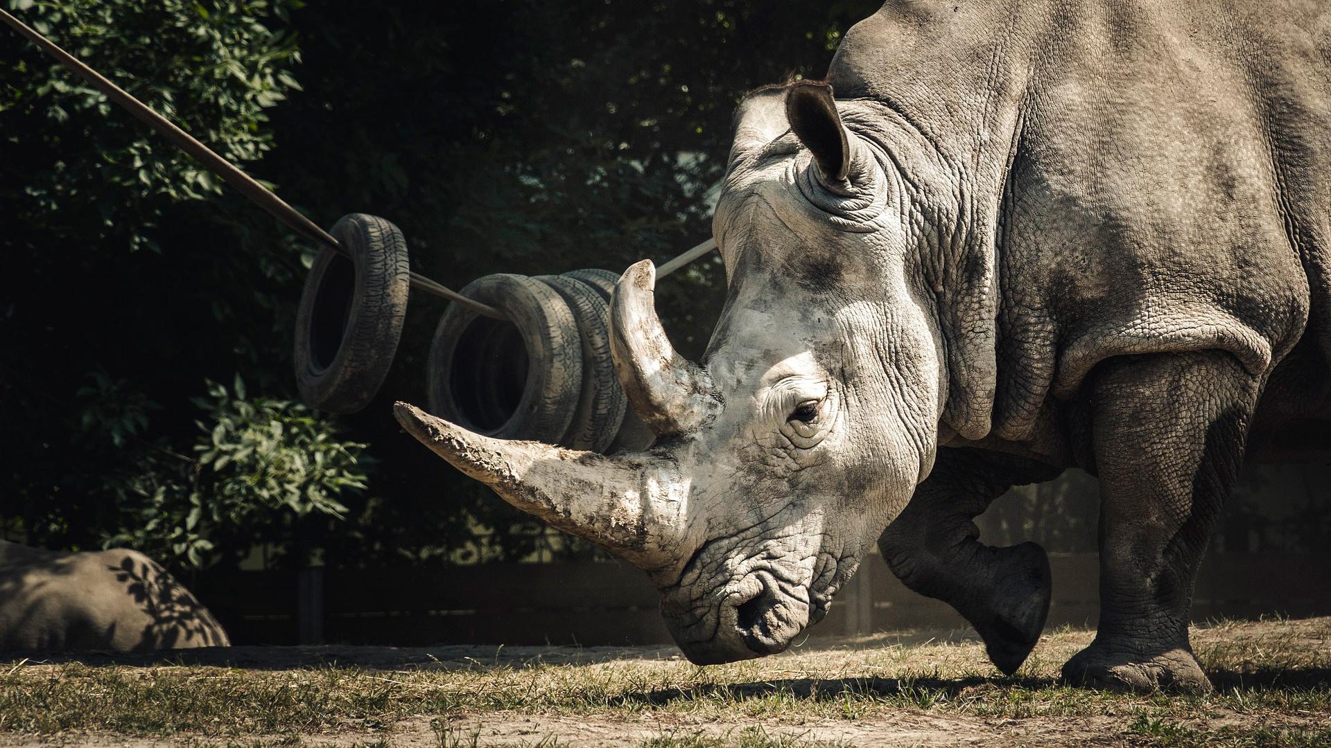 Впервые на территории России: в крымской пещере «Таврида» обнаружили кости древнего носорога стефаноринуса