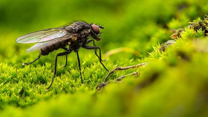 «Боевые» мухи встали на защиту лесов в Самарской области