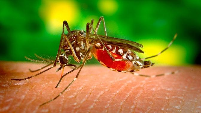 Врач рассказала об опасных последствиях укусов комаров