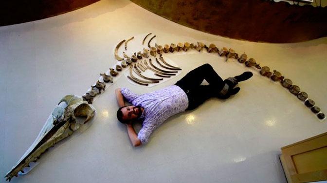 Скелет пятиметрового хищного дельфина нашли в США