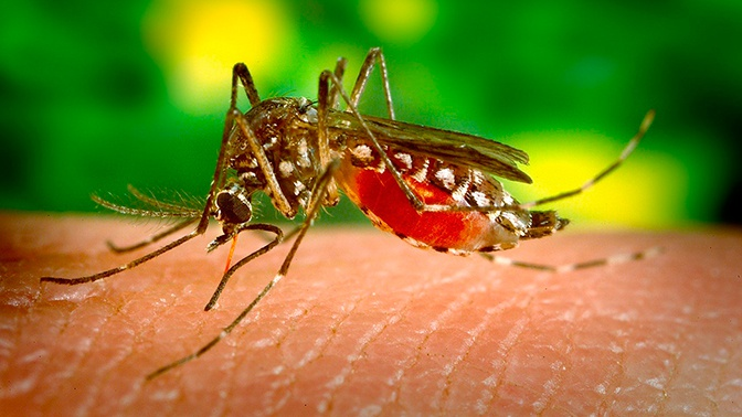В Роспотребнадзоре назвали насекомых-кровопийц пострашнее комаров