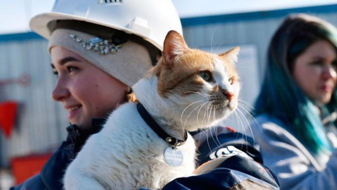 Символ Крымского моста кот Мостик нашел новую «работу»