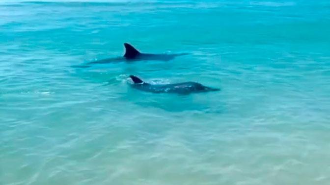 Дельфины устроили водное представление под Анапой: видео