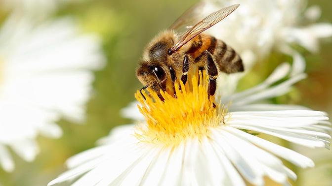 Ученые связали окончание пандемии COVID-19 с появлением пыльцы