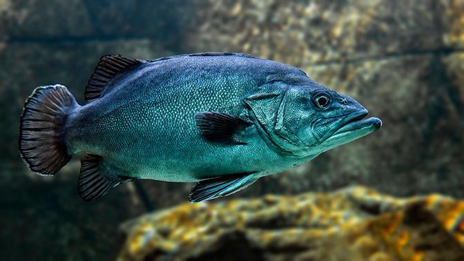 Пластик и ртуть: Кусто рассказал об опасности употребления в пищу океанических рыб