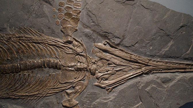 Ученые нашли скелет одного динозавра внутри другого