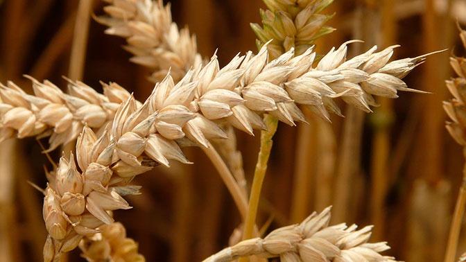 Путина обеспокоила тенденция к снижению сельхозпроизводства в Ростовской области
