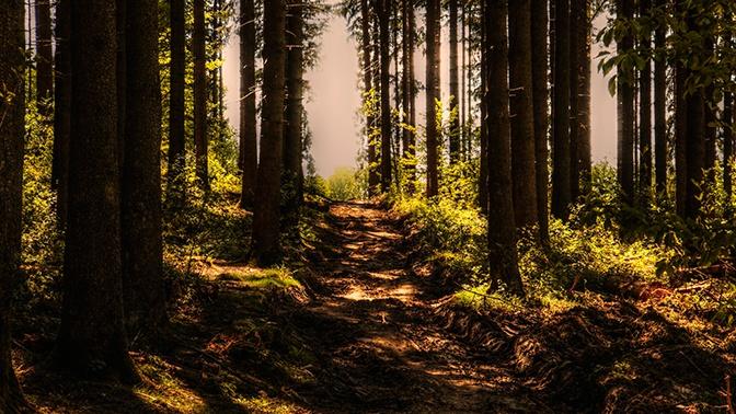В МЧС дали советы по выживанию в лесу