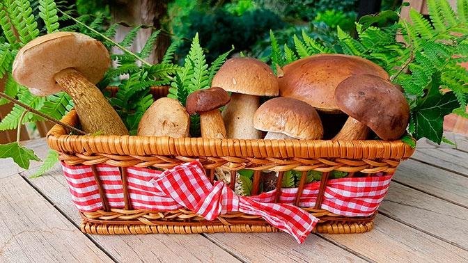 Синоптик посоветовал жителям Центральной России идти за грибами и ехать к морю