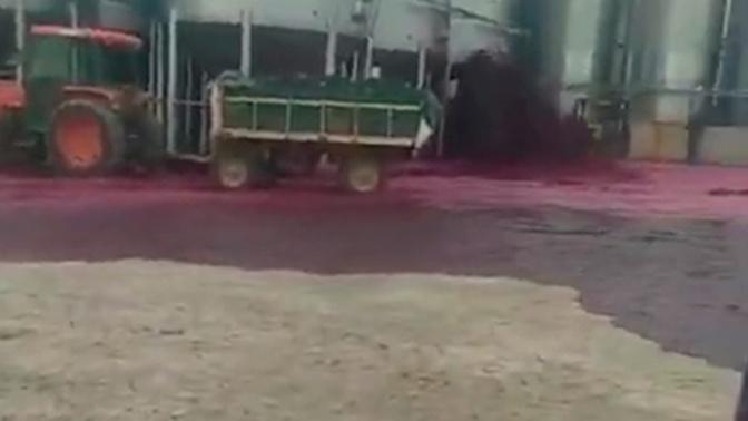 Завод в Испании затопило вином: видео