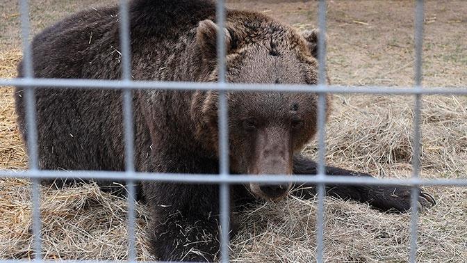 Медведь напал на дрессировщика и его 10-летнего сына в подмосковном цирке