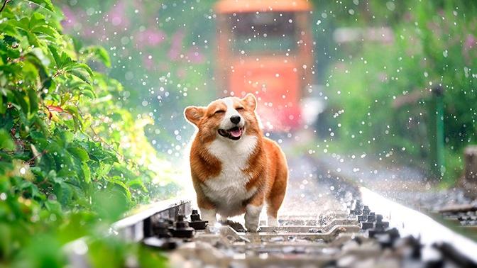 Зоопсихолог рассказала, как завоевать доверие собаки