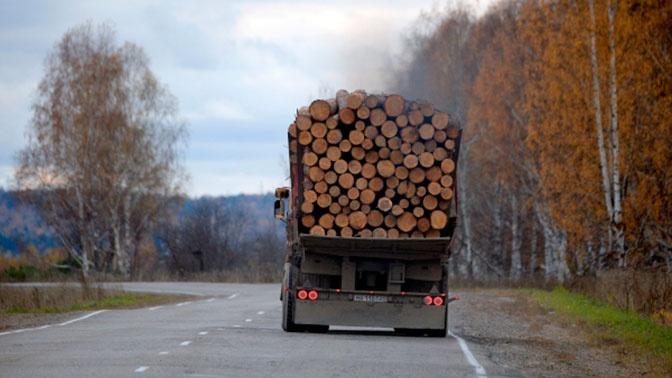 Кабмин скорректирует перечень лесопродуктов, запрещенных к вывозу за границу