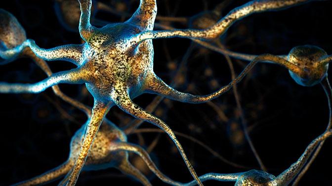 Ученые рассказали, что происходит с человеческим мозгом после смерти