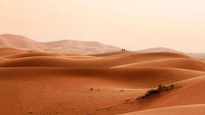 Ученые нашли сотни миллионов деревьев в пустыне Сахара