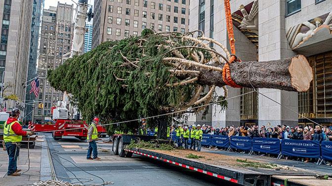 В центре Нью-Йорке установили главную рождественскую ель