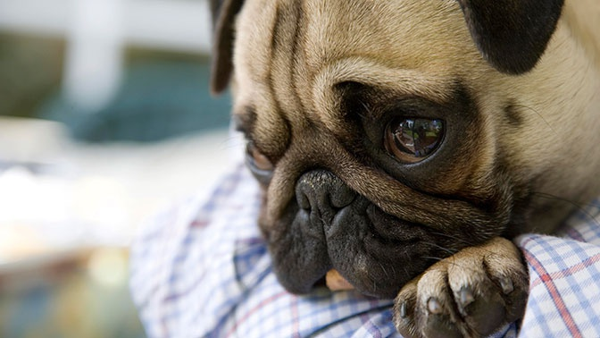 Ученые выяснили, что животные переживают человеческие эмоции