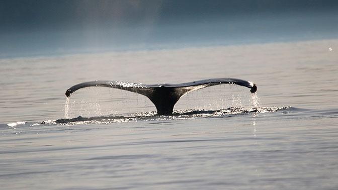 Скелет огромного древнего кита обнаружили в Таиланде