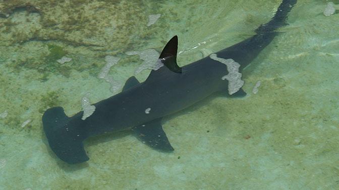 Мужчина выжил после встречи с акулой, которую даже не заметил