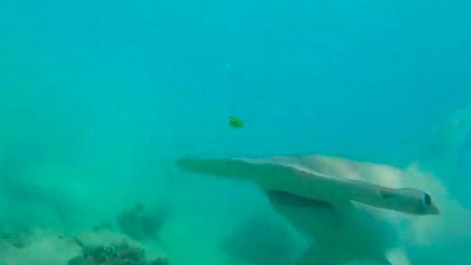 Подводная схватка: битва дайвера с огромной акулой попала на видео