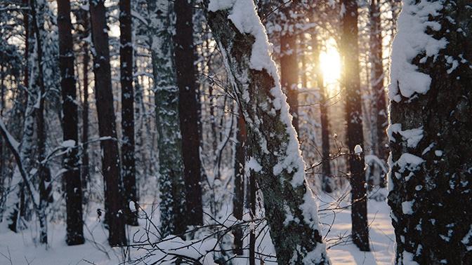 Снегопады и оттепели: синоптики рассказали о погоде в Европейской части России