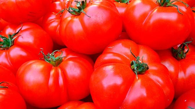 Россельхознадзор провел переговоры о поставках томатов из Армении и Азербайджана