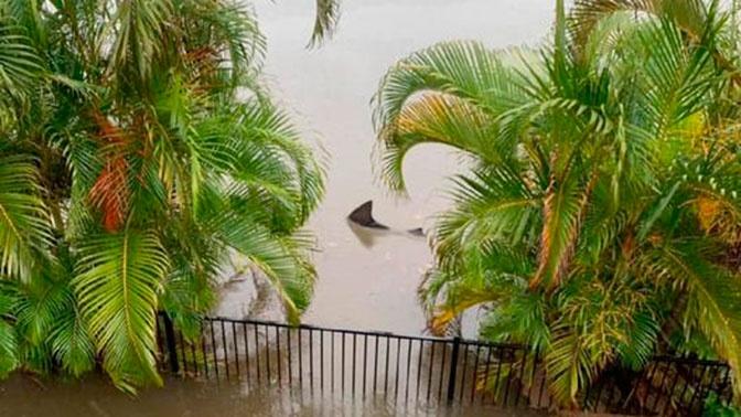 Австралиец нашел акулу в своем саду