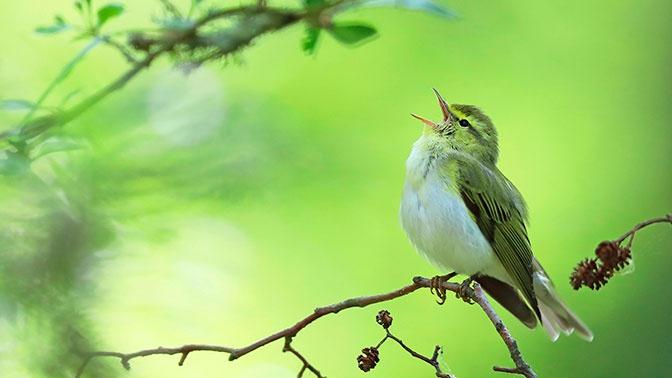 Исследователи выяснили, что пение птиц улучшает самочувствие человека