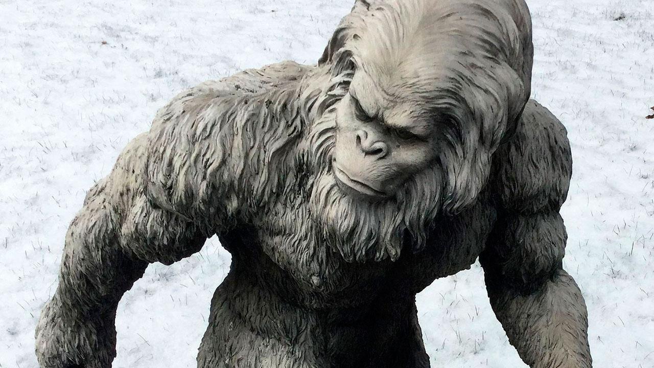 Четверо друзей заметили «снежного человека» в канадском лесу