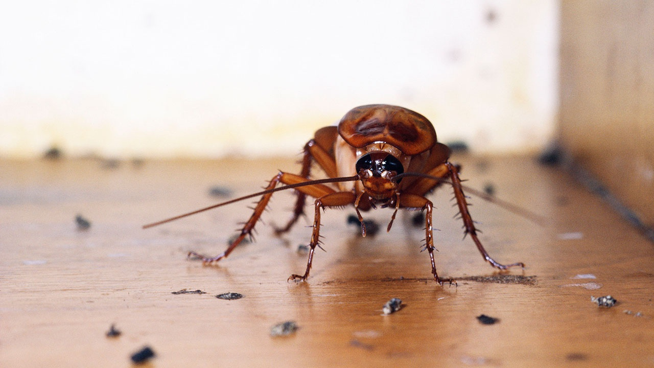 В Роспотребнадзоре предупредили о скором нашествии тараканов в многоквартирных домах