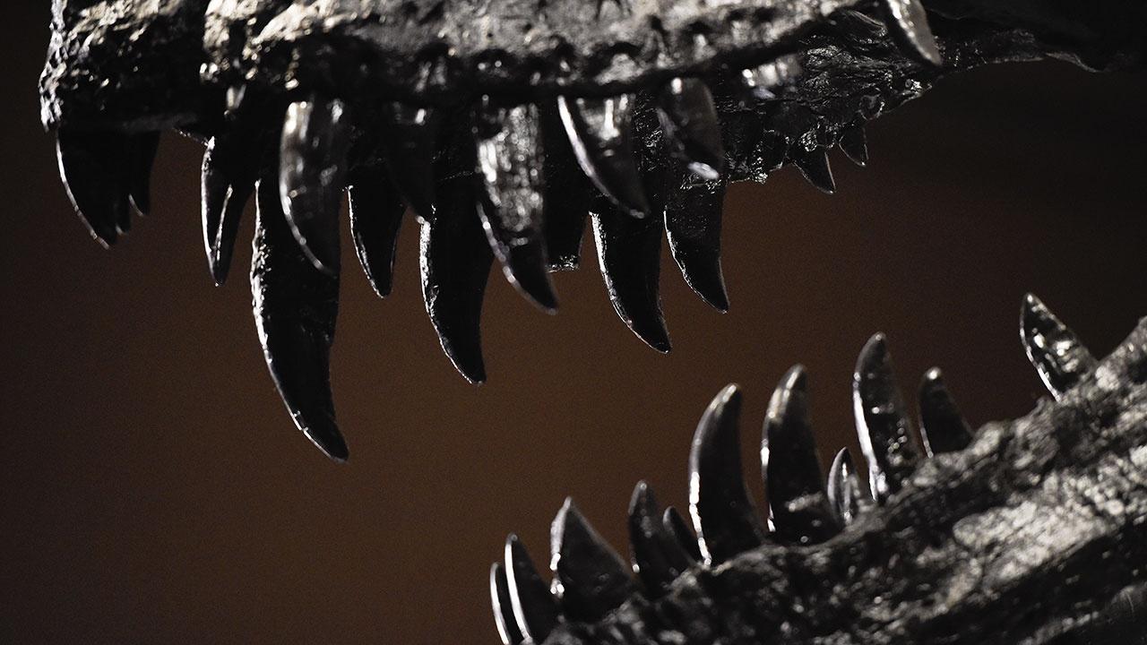 Ученые рассказали о динозаврах, попавших на Луну