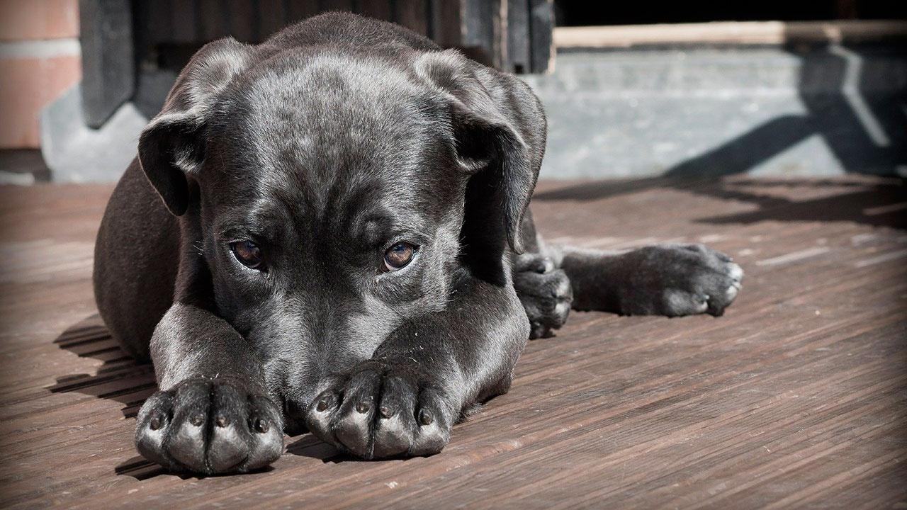 Кинолог призвал ни в коем случае не переводить собак на веганскую диету