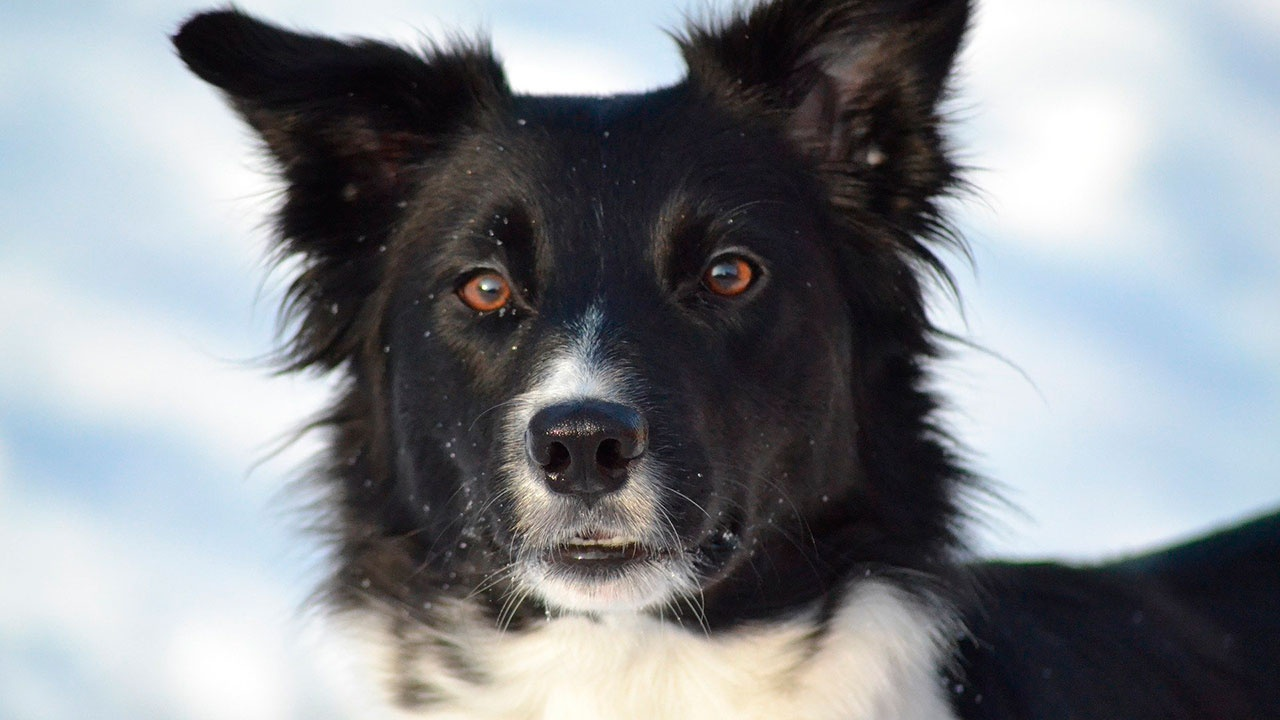 В США собака получила в наследство 5 млн долларов