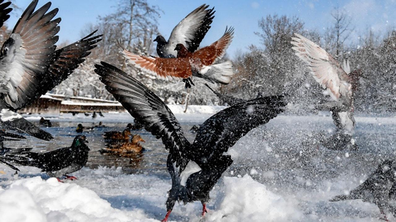 В Роспотребнадзоре оценили шансы на появление новых очагов птичьего гриппа в РФ