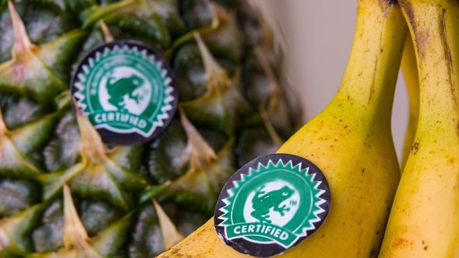Терапевт назвала полезные и опасные для здоровья фрукты