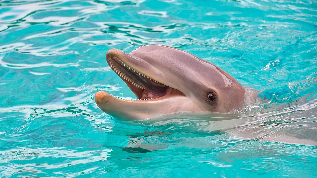 СМИ: в России могут запретить вылов животных для дельфинариев
