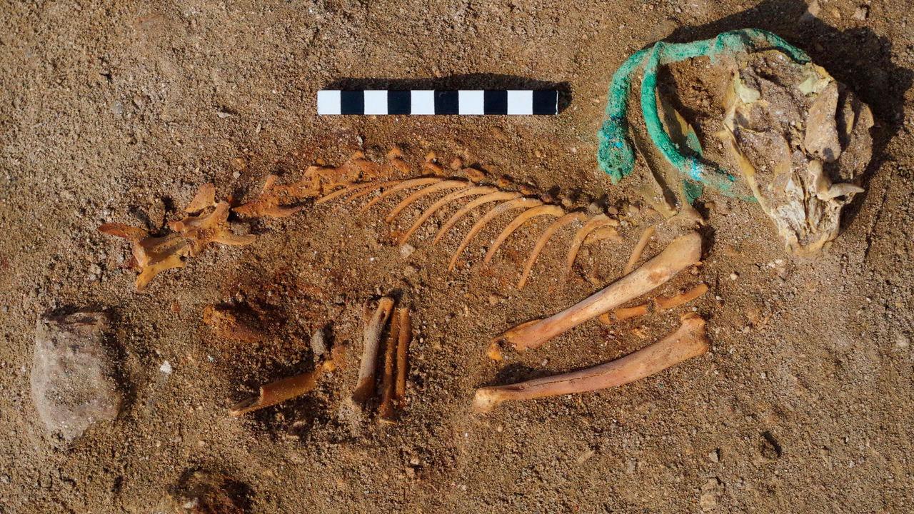 Древнейшее кладбище домашних животных найдено в Египте